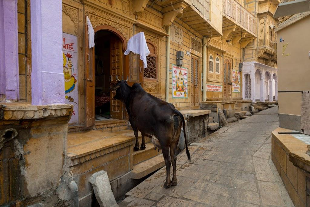 Viaggio in India: consigli da sapere per non perdere il sorriso