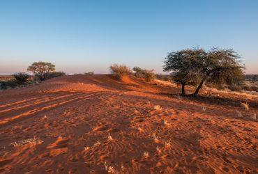 NAMIBIA – Il Deserto del Kalahari