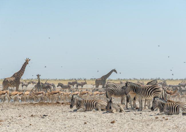 ETOSHA – Guida pratica per organizzare un safari