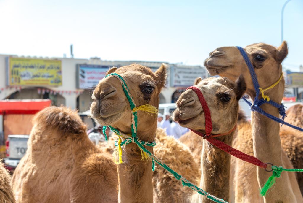Itinerario in Oman – Il mercato di Sinaw & la Riserva Ras Al Jinz