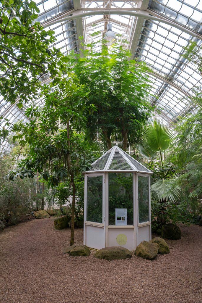 Schonbrunn, serra delle palme