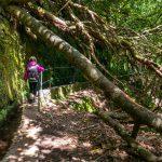 Caldeirão Verde, Madeira