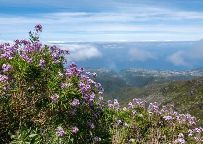Madeira, il giardino galleggiante