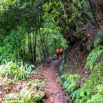 Levada Da Achada, Madeira