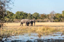 Botswana, safari nella Moremi Game Reserve