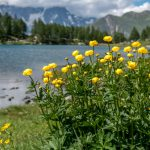 Valle d'Aosta, Lago d'Arpy