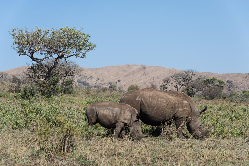 Foto safari all'Hluhluwe- Imfolozi