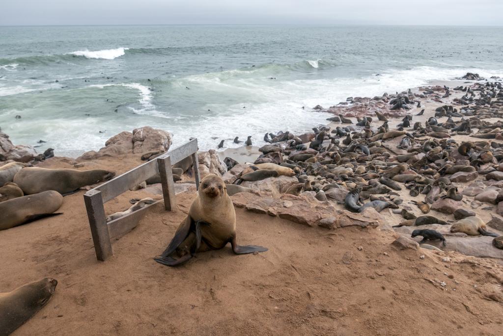 NAMIBIA – Il Promontorio di Cape Cross & la Skeleton Coast